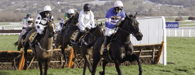 horses at cheltenham festival