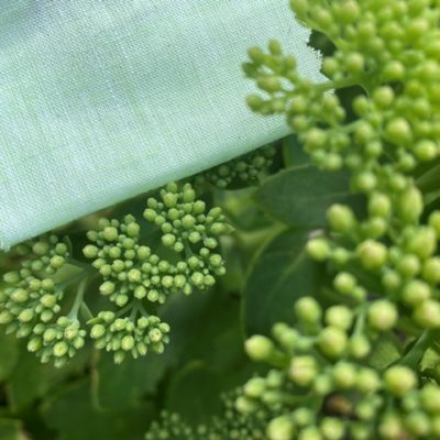 Aruba Plain Lime Cotton & Linen Fabric